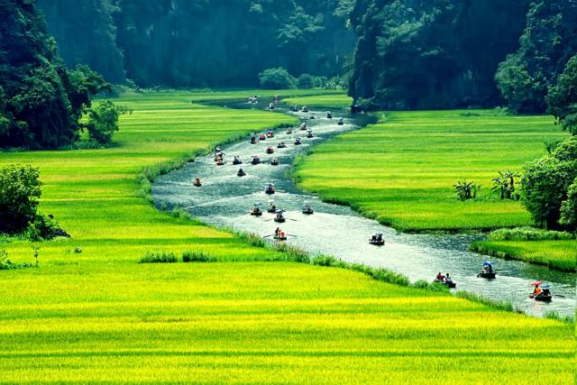 du lịch Ninh Bình ngắm ruộng lúa chín 640x480 - HA NOI – NINH BINH – HA NOI/ 01 DAY
