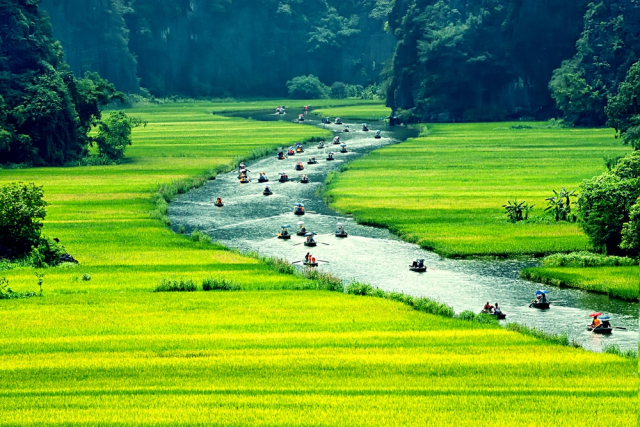 du lịch Ninh Bình ngắm ruộng lúa chín 640x480 - NINH BINH CITY TOUR - PRIVATE TOUR